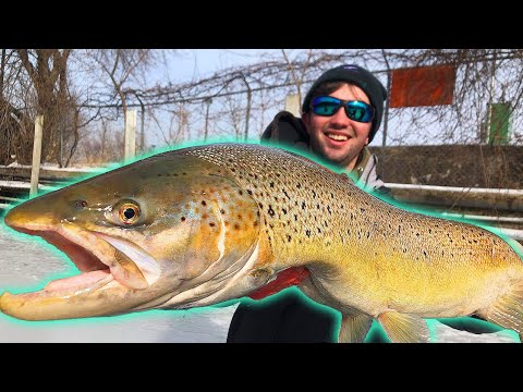 Ice Fishing Giant River Trout!!