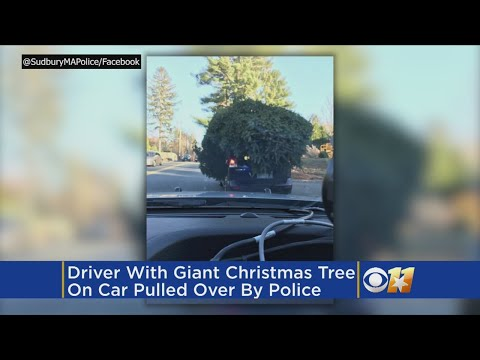 Driver With Giant Christmas Tree On Car Pulled Over