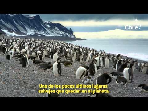 Wild Antarctica