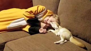 Fennec Fox & Her Favorite Human 💜💜💜