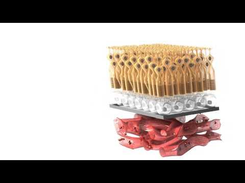 Анатомия Кровеносных сосудов