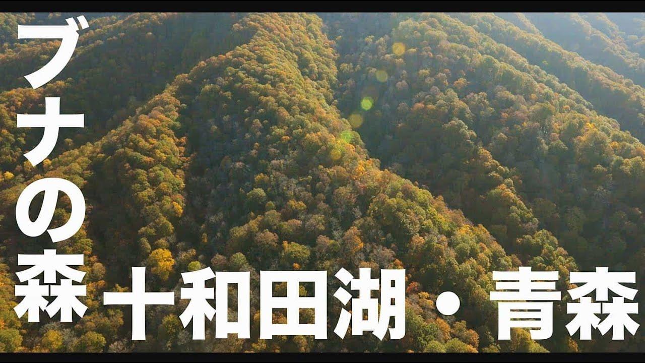 【青森・十和田湖#146】「ブナの森と十和田湖」空撮・たごてるよし_AOMORI Aerial_TAGO channel
