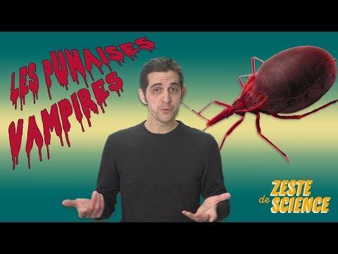 Le sang froid des punaises vampires - Feat. Pierre Kerner - ZdS#11