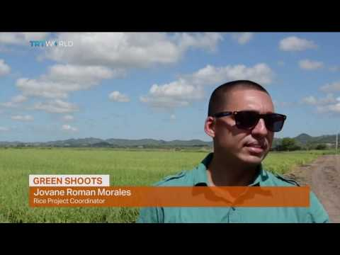 Money Talks: Puerto Rico's agricultural renaissance