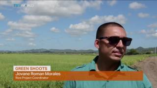 Money Talks: Puerto Rico's agricultural renaissance