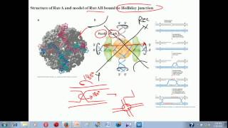 Genetic recombination lecture 1 | homologous recombination