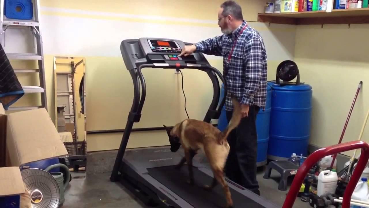 How To Train Dog To Run On Treadmill