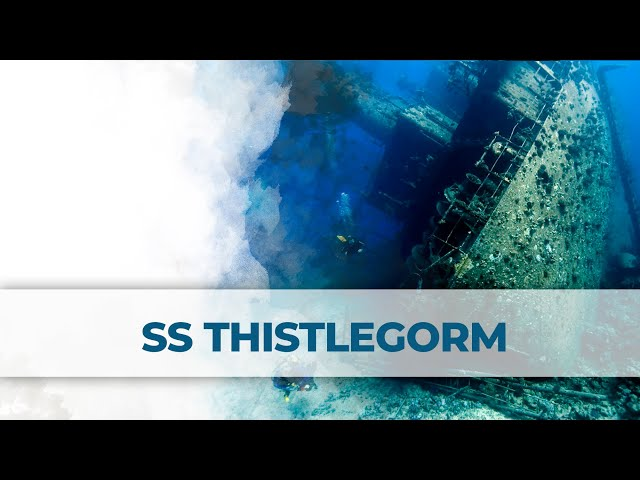 Red Sea | SS Thistlegorm | 2LittleDivers