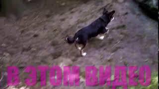 КАК Я УЧУ ЩЕНКА НЕ БОЯТЬСЯ ДРЕССИРОВКА собак и щенка КОНКУРС Magic Family 1