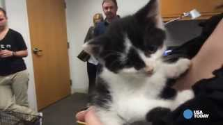 Uber Delivers Cats On 'National Cat Day'
