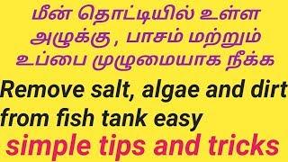பாசி மற்றும் உப்பு எளிமையாக மீன் தொட்டியில் இருந்து நீக்க remove algae salt / Fish Aquarium Tamil