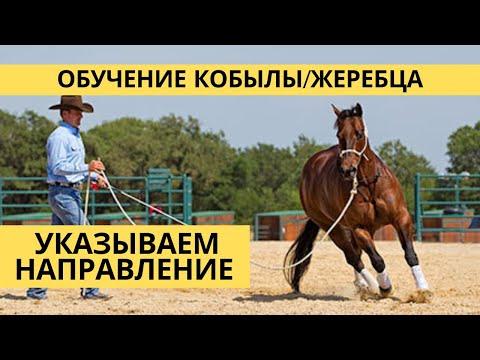 Обучение молодой лошади направление движения