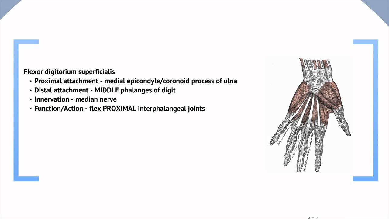 Großzügig Proximal Vs Distalen Anatomie Bilder - Anatomie Ideen ...
