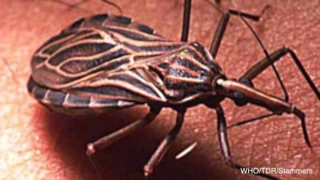 10 Human Parasites >> 10 Terrifying Parasites That Love To Live Inside Human Body