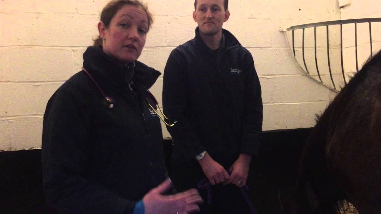 Download Monitoring inpatients - inpatient nurse & stable manager at Towcester Equine Vets
