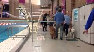 Illini Service Dogs By The Pool