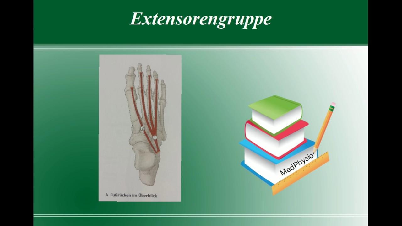 Anatomie - die wichtigsten Fußmuskulatur - MedPhysio - YouTube