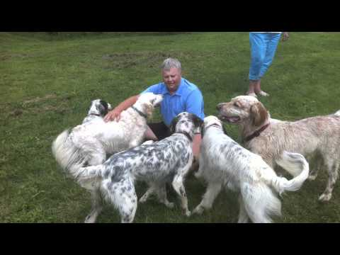 Amber the English Setter with her family in Greenfield