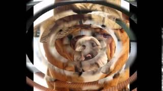 корм для собак хэппи дог(, 2014-10-20T16:28:21.000Z)