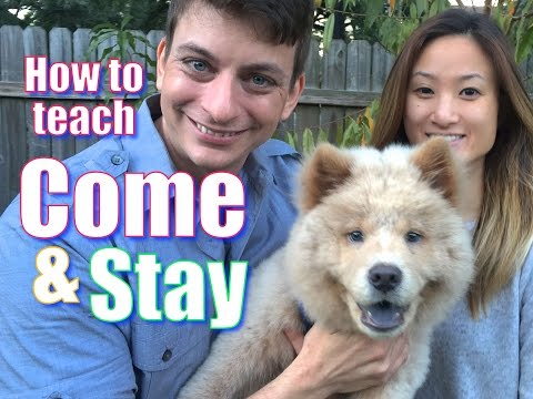 the-secret-to-teaching-your-dog-come-and-stay