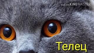 Гороскоп кошек//Пиши в комментариях кто ты по знаку зодиака//Furry Lynx//