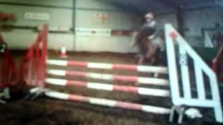 Colin Hannan Bay Gelding