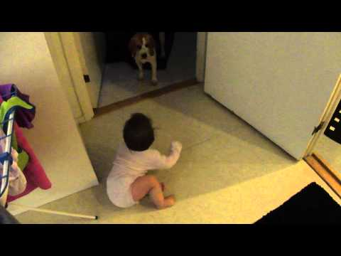 Baby playing with Beagle