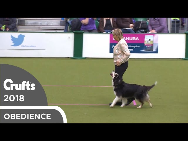 Obedience - Bitch Championship - Part 4 | Crufts 2018