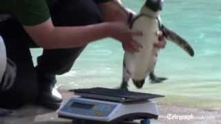 Animals hop on scales at London Zoo