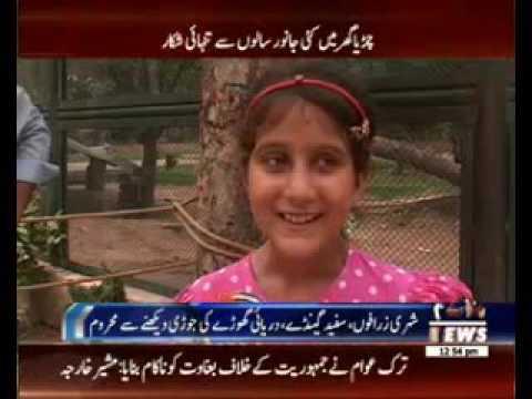 لاہور کے چڑیا گھر میں مختلف اقسام کے جانوروں کی کمی ہے thumbnail