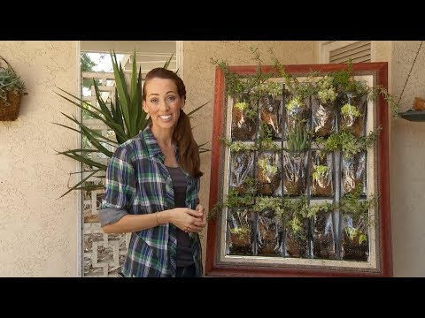 Create a Living Wall of Succulent Plants