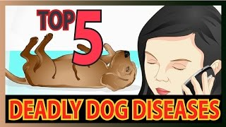 Top 5 Deadly dog Diseases (Dog health tips)