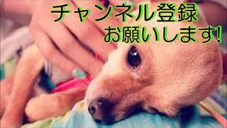【衝撃】上原多香子、交際中・コウカズヤと破局!?トントンの時と同じように… コウカズヤ 検索動画 13