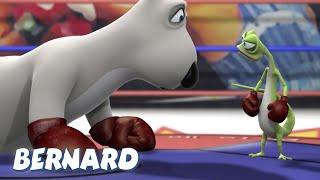 Download Boxing Match! AND MORE | Bernard Bear | 30 min Compilation | Cartoons for Children