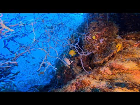 【GoPro HERO7 under water】9th dive in Kimbe Bay, Papua New Guinea