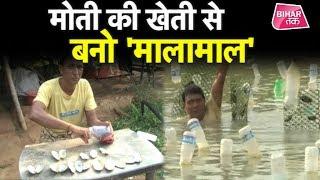 मोती की खेती से कमा रहे हैं लोग करोड़ों !