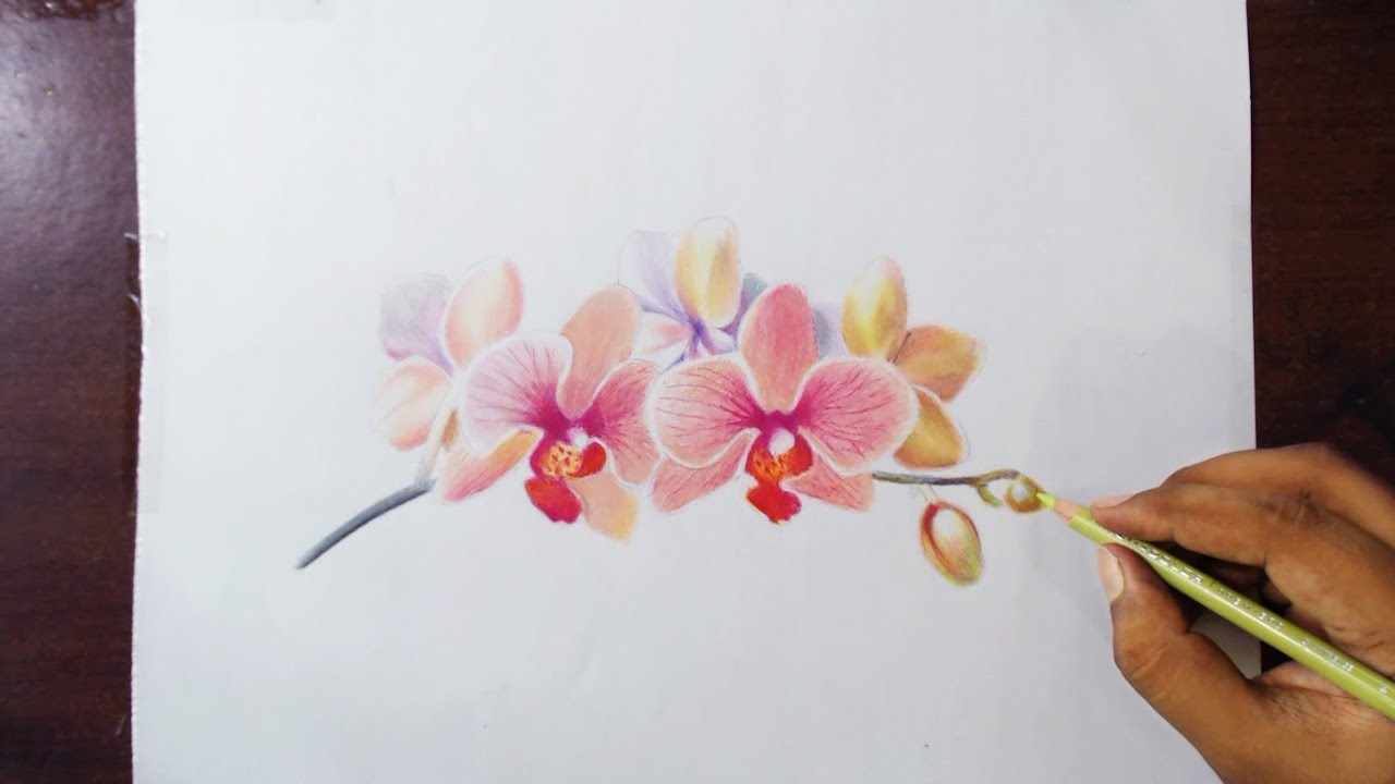 Uncategorized Orchid Drawings drawing orchids colored pencils youtube