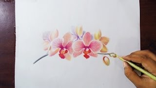 Drawing Orchids - Colored pencils