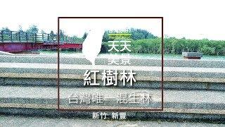 新豐紅樹林生態保護區 新竹景點推薦 - 美景系列