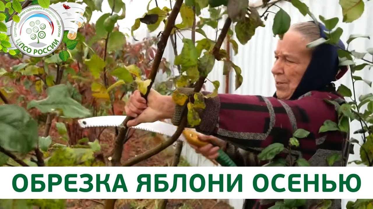 ютуб обрезка яблони осенью