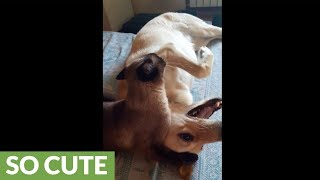 Cat wants to wrestle, dog wants to relax