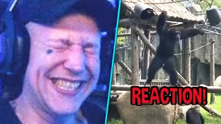 Monte REAGIERT auf Animals Try Not To Laugh CHALLENGE!😂 MontanaBlack Reaktion