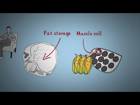 CAN YOU TURN FAT INTO MUSCLES?