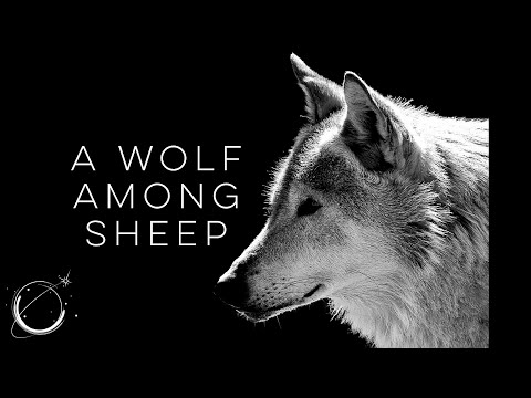 A Wolf Among Sheep - Motivational Video