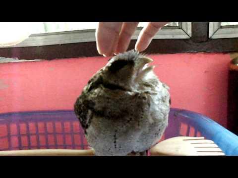 Takecare Baby Owl 2  깡이 (kkang-i)