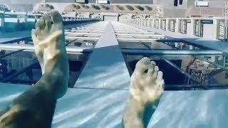 Los Videos mas Raros del Mundo 108 / Videos Impresionantes