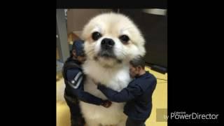 ,,Psy pomogą ci wszędzie