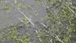 coyotes | Zachau Debris Basin | Sunland (L.A.) | 9 Mar 2008