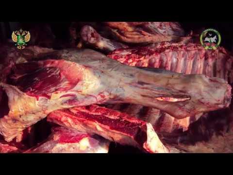 В Брянской области пресечен незаконный ввоз говядины неизвестного происхождения