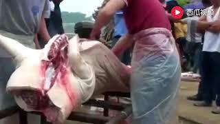 专业杀猪20年,再大的猪,也是一刀解决,二师兄的终结者!